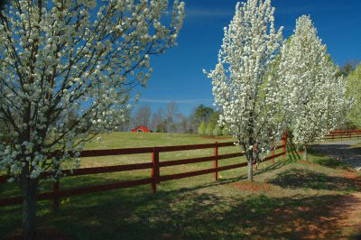 Trees in blossom in the north of Georgia, USA