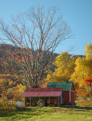 Trees in autumn and a tractor in a shed