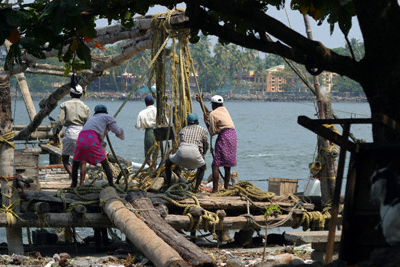 Fishermen hauling on their nets on the seafront at Kochi (Cochin), Kerala, India