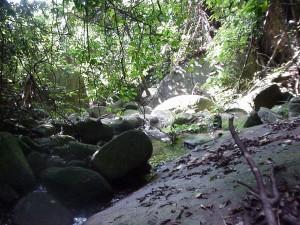 Forest on Tioman Island, Malaysia