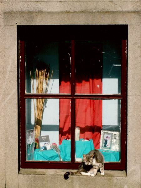 A cat grooms itself on a sunny window-sill in Stromness