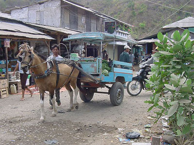 Horse and cart by Maluk market on the Indonesian island of Sumbawa