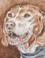 "Portrait of Sam the Kelb tal-Kaċċa (""gun dog"")"
