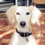 Odo - pet dog