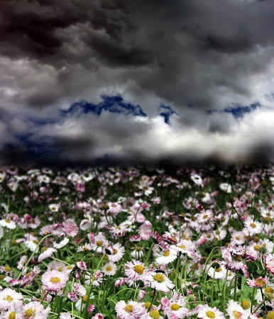 Stormclouds over a field of daisies