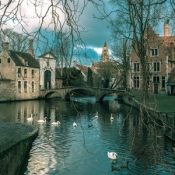 Swans on a canal in Autumn