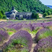 Lavender in front of the Abbaye de Sénanque in Provence