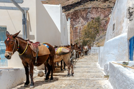 A queue of donkeys on a Greek street