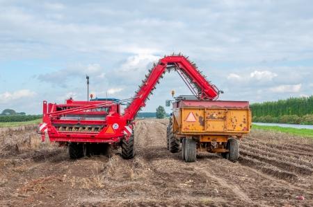A mechanised potato harvester at work